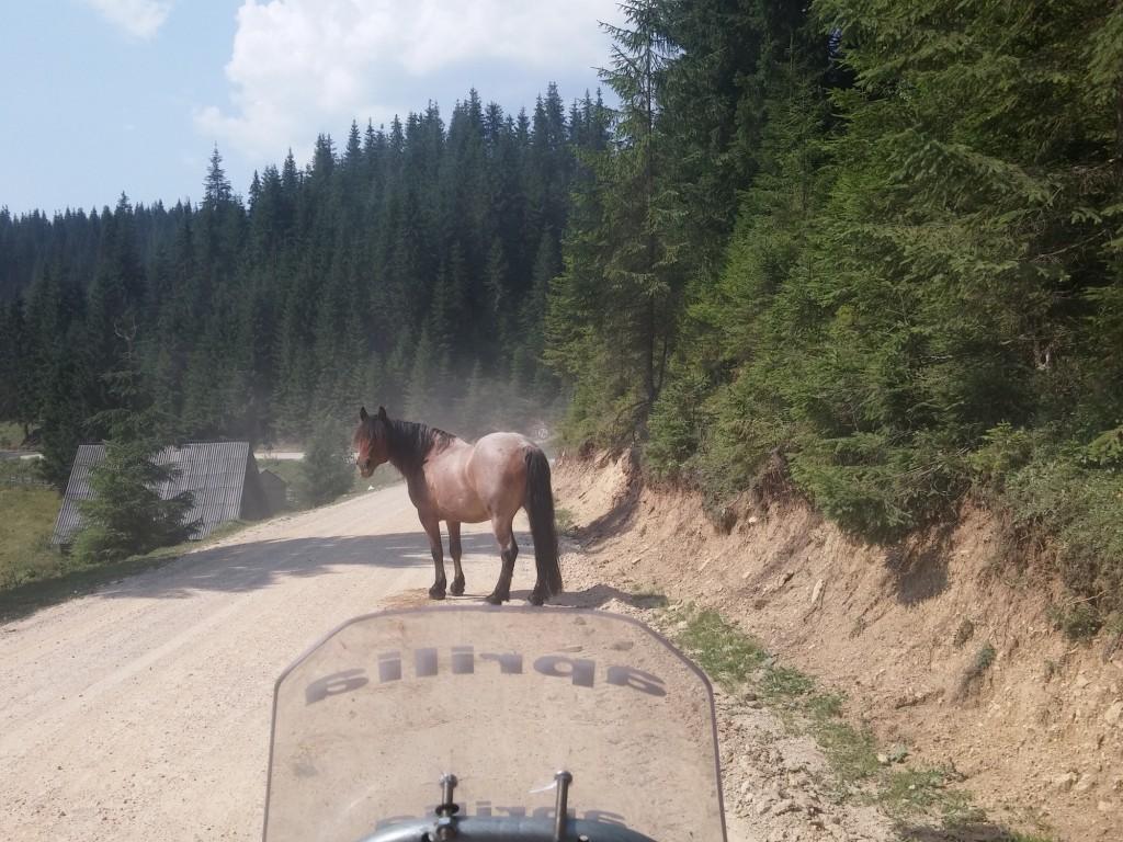 Rumunsko, Koně, Motorky